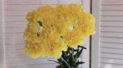 Karanfil tohumdan nasıl yetiştirilir?